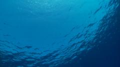 Underwater footage surface light corsica corse mediterranean Stock Footage