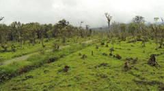 Flying low over former montane rainforest converted to cattle pasture Stock Footage