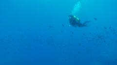 Underwater footage diver bubbles surface fish corsica corse mediterranean Stock Footage