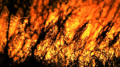 Fire nearly,burned pieces move in the center of the fire in slow motion Stock Footage