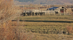 Cows stand in pasture next to river in Idaho Stock Footage