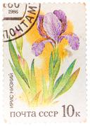 """Stamp printed in ussr from the """"plants of russian steppes """" issue shows iris Stock Photos"""