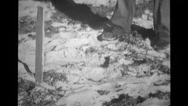 Japanese Mortar Captured At Bougainville, Cable Laying To Paruata Island 2 Stock Footage