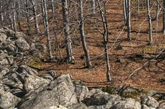 Moraines and leafless beech forest - stock photo