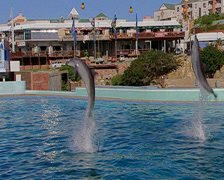 Two dolphins putting on a display at a dolphinarium in Port Elizabeth Stock Footage