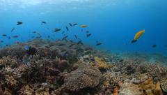 Fish feeding underwater Stock Footage