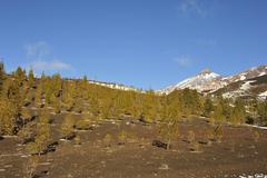 Volcano El Teide at Tenerife with canary Pine Stock Photos