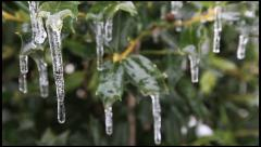 Ice on a Holly 4 - stock footage