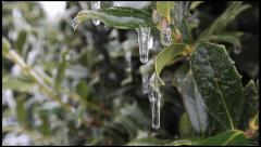 Ice on a Holly 1 - stock footage