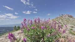 Two bikers in slow motion on a rocky ridge with purple flowers in Idaho Stock Footage