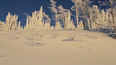 A male skier skis through trees in Wyoming Stock Footage