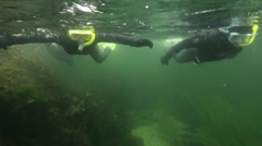 Snorkelers swim close to surface in Ketchican, AK. Stock Footage