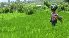 Balinese woman carrying groceries in the rice field of Tirta Gangga Stock Footage