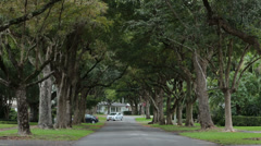 Car drive Coral Gable Florida tree lined street fast HD 2277 Stock Footage