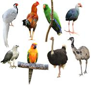 collection of bird isolated - stock photo