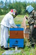 beekeepers open beehive after smoking - stock photo
