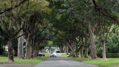 Car drive Coral Gable Florida tree lined street HD 2277 - stock footage