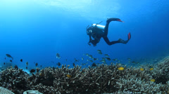 Diver in blue water swimming over coral reef Stock Footage