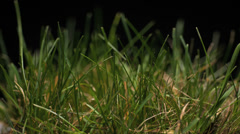 4K Time Lapse, Green grass growing from seed Stock Footage
