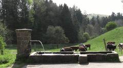 Ein Wasserbrunnen mit Kühe Stock Footage
