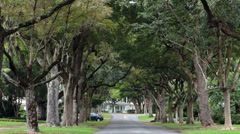 Coral Gables Florida neighborhood trees HD 2274 Stock Footage
