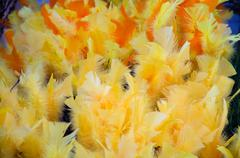 Yellow easter feathers Stock Photos