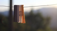 Ant and clothes peg 2 - stock footage