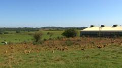 Free range chicken farm Stock Footage