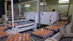 Egg packing plant Stock Footage
