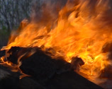 Stock Video Footage of Campfire in forest - close up