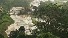 Rice paddies Stock Footage