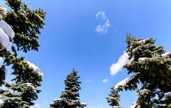 Tree with fresh snow on blue sky Stock Photos