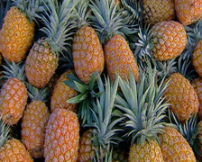 A crate of freshly picked pineapples, Bathhurst - Pi Stock Footage