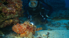 Underwater footage fish diver chapon corsica corse mediterranean Stock Footage