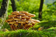 Mushrooms Stock Photos