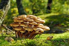 Stock Photo of mushrooms