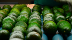 Avocados hass rolling in packaging line Stock Footage