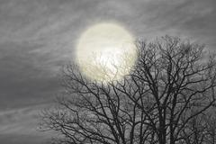 Night moon shines through the clouds and trees. Stock Photos