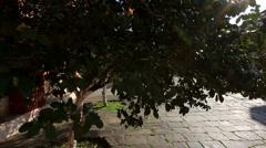 Vatopedi Monastery, Greece Stock Footage
