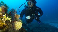 Underwater footage fish diver chapon corsica corse mediterranean Stock Footage