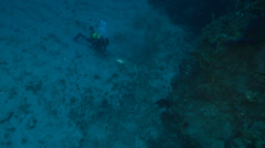 Underwater footage mostelle fish diver corsica corse mediterranean Stock Footage