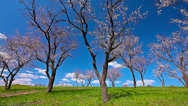 Stock Video Footage of spring landscape. timelapse. 4K. FULL HD, 4096x2304