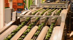 Linepack industry fruit avocados Stock Footage