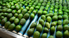 Avocado hass linepack pan Stock Footage