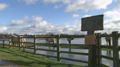 Horses standing by flood water of the river thames on wolvercote co Stock Footage