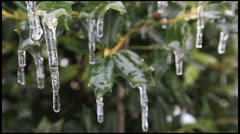 Ice on a Holly 5 - stock footage