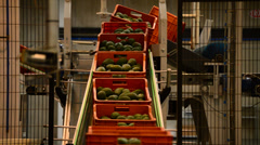 Boxes avocados in linepack Stock Footage