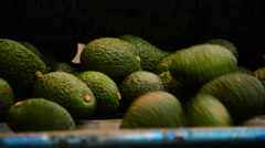 Avocados in linepack Stock Footage