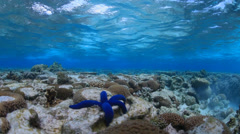 Beneath the water surface - stock footage