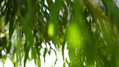 Green Leaves 01 Sunlight Stock Footage